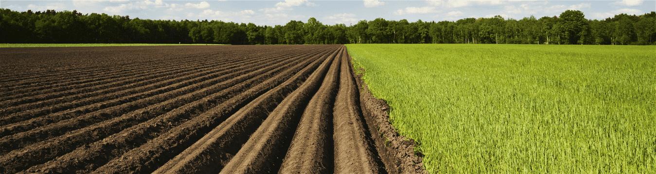 Aceites de parafina para protección de cultivos